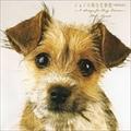 ジョンの純な恋物語(特別完全版)〜6 Songs for DOG LOVERS〜