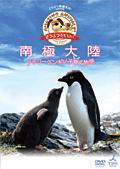 「どうぶつ奇想天外!」 南極大陸 アデリーペンギン子育て物語