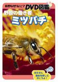 自然なぜなに? DVD図鑑 野原の働き者 ミツバチ
