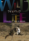 ワイルドライフ アフリカ大サバンナ 飛ばない鳥 大地を生きる