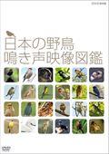 日本の野鳥 鳴き声映像図鑑